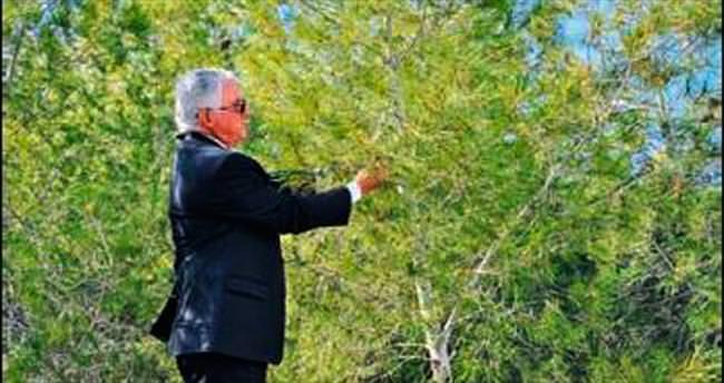 Girne Üniversitesi Ormanı zararlı böceklerden temizlendi