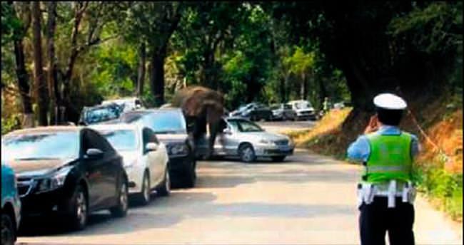 Parktan kaçan fil 15 aracı dümdüz etti