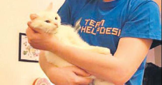 Mülteci kedinin ailesi aranıyor