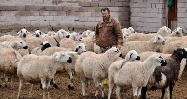 Türkiye, Hayvancılıkta Avrupa'da liderliğe oynuyor
