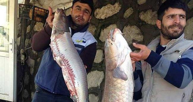 Batman Barajı'nda 22 kiloluk Şabot Balığı yakalandı