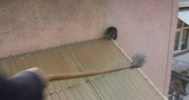 Kurtarmak istedikleri kedi 25 metreden aşağı düştü