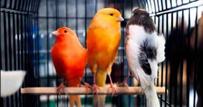 Kuş Fuarı'na yoğun ilgi var