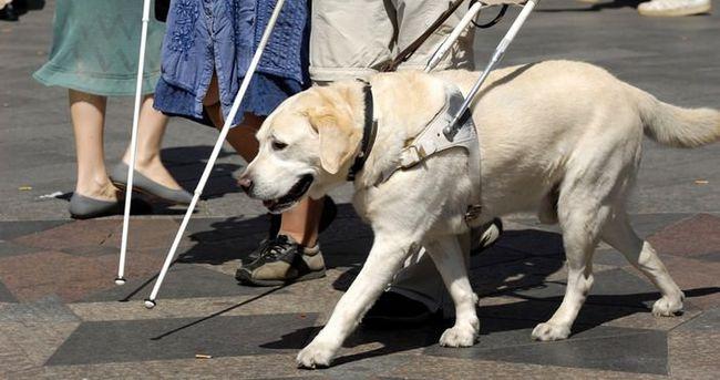 Görme Engelliler için Rehber Köpekler artık Türkiye'de!