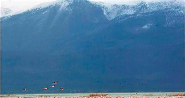 Sultan Sazlığı'nda kuş sayısı arttı