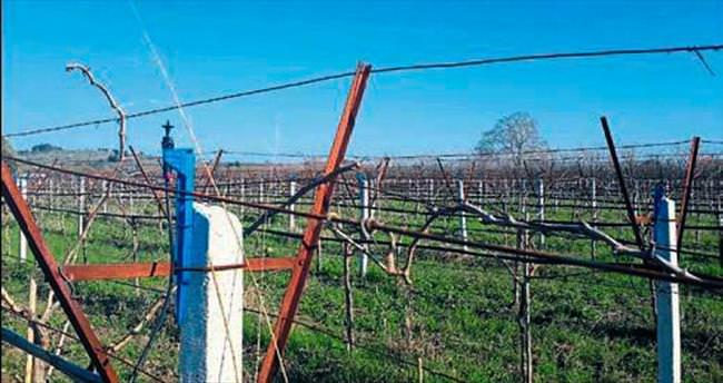 Çebi: Bahar havası üretimi tehdit ediyor