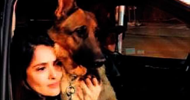 Hayek köpeğinin katilinin peşinde