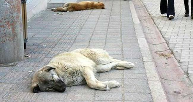 10 köpek zehirlenerek, telef edildi