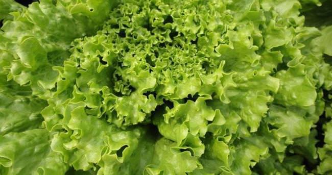 Salatalarla gelen şifa