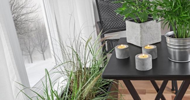 Evinizdeki havayı temizleyen bitkiler
