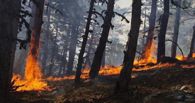 Sıcak havalar ormanları tehdit ediyor