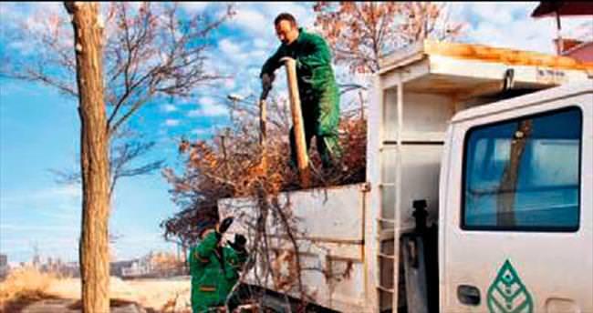Çankaya'da ağaçlar yaza hazırlanıyor