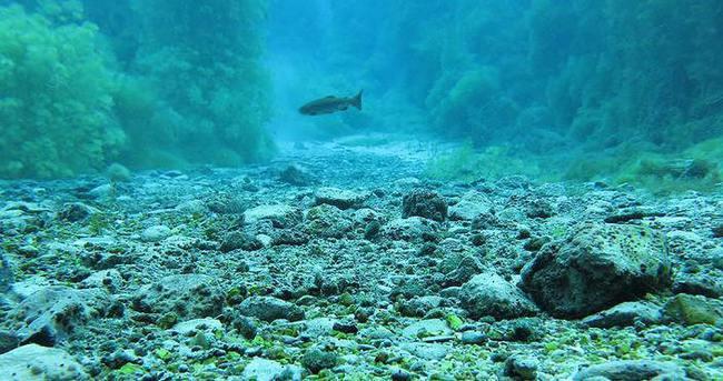 Balıklara eDNA'lı takip
