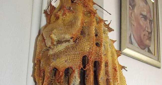 Hava soğuyunca arılar telef oldu