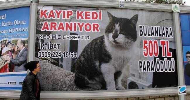 Kedisini bulmak için dev billboarda ödüllü ilan verdi