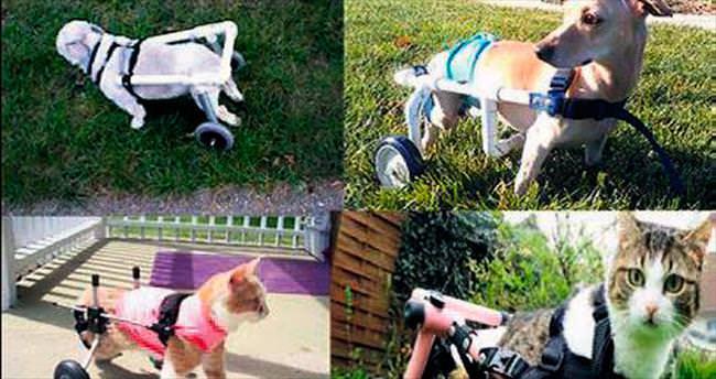 Engelli kedi köpeklerin kahramanı