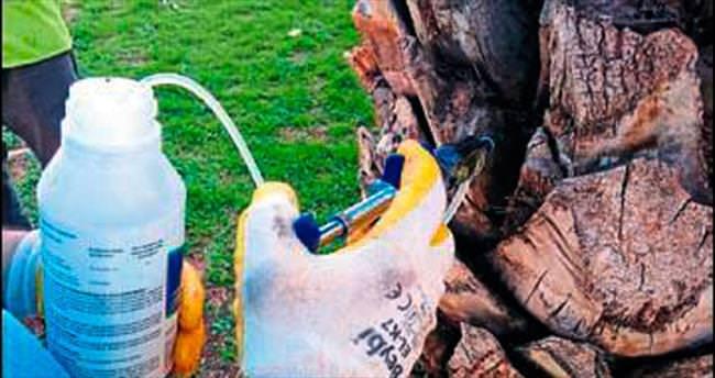 Ağaçlar zararlılara karşı korunuyor