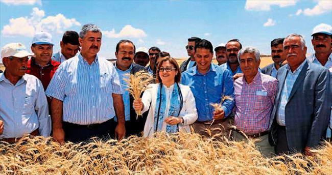 Büyükşehir Belediyesi tarımda kalkındıracak