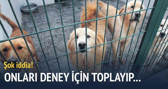 Köpekleri deney için Amerika'ya yolladılar
