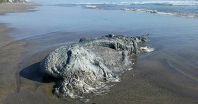 Meksika'da 4 metrelik deniz canavarı bulundu