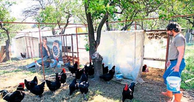 Tavukların 'Birleşmiş Milletleri' gibi çiftlik