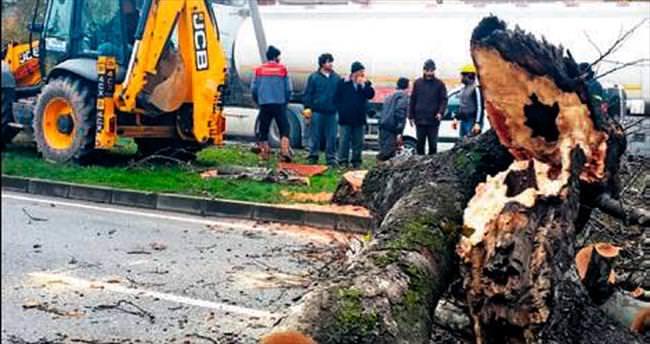Ağaç katliamını savunan vekil hayal kırıklığı yarattı