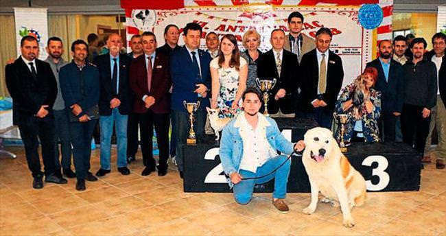 Köpeklerin yarışması