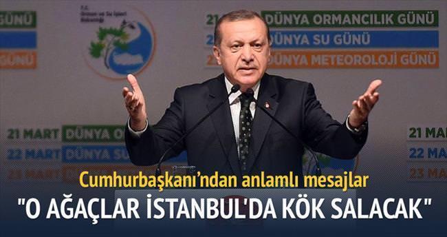 '200 bin çınar ağacı dikeceğiz'