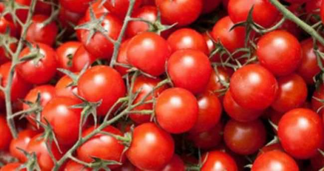 Salkım domatetes daha çok kazandırıyor