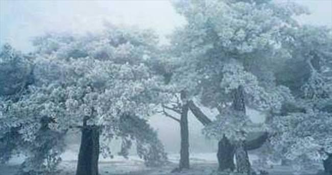 Manisa Spil Dağı beyaza büründü