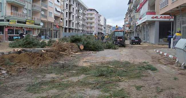 Yarım asırlık ağaçları kestiler