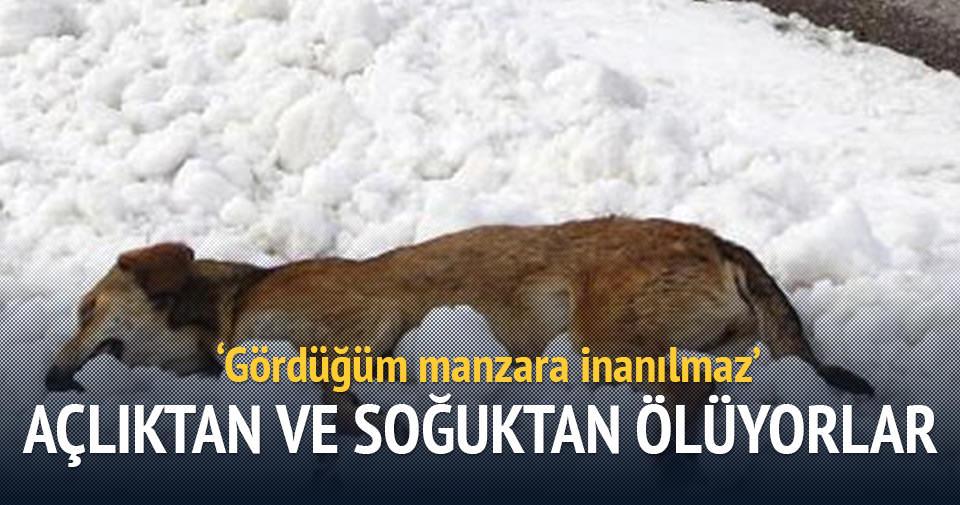 Açlıktan ve soğuktan ölüyorlar