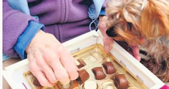 Çikolata hayvanlar için zehirden farksız
