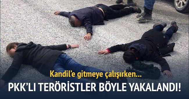 Hakkari'de ikisi kadın 4 PKK'lı yakalandı