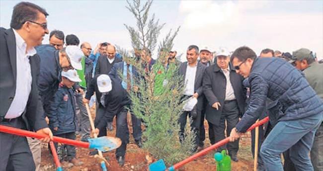 İHH yetimler için Gaziantep'te fidan dikti