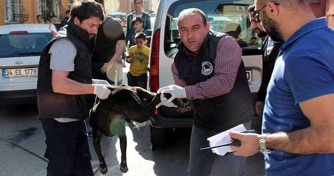 İstanbul'da pittbull dehşeti: 3 yaralı