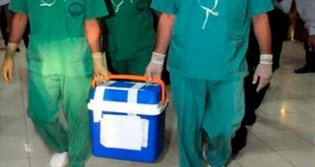 Türler arası organ naklinde umut veren tespit