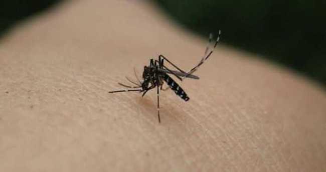Zika virüsü sanılandan daha korkutucu!