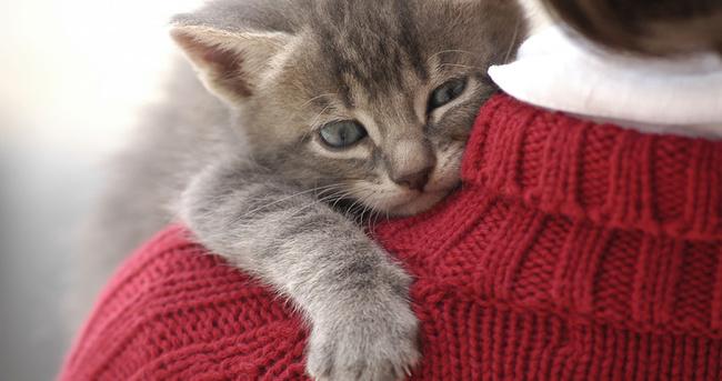 Kedi alerjisi nasıl geçer?