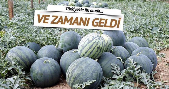 İlk karpuz hasadı Antalya'da başladı