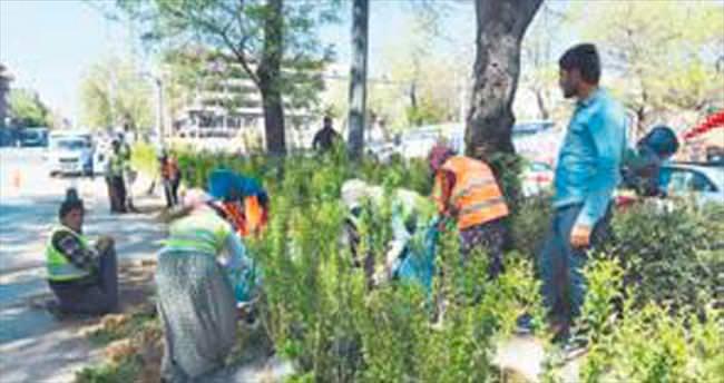 Atatürk Bulvarı artık daha yeşil