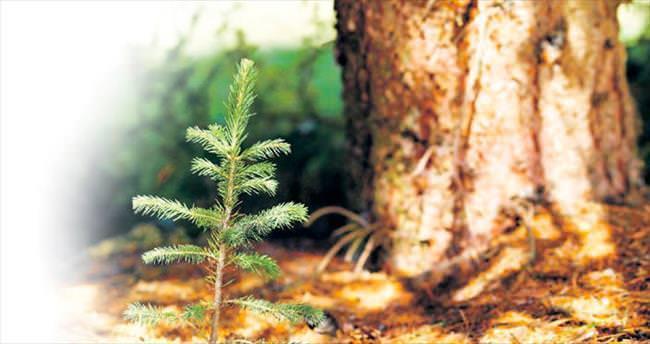 Çevreci ürün için her ağaca 3 fidan