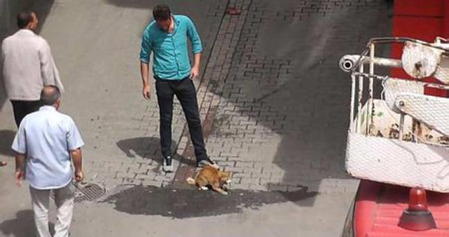 İtfaiyenin kurtarmaya çalıştığı kedi 5'inci kattan düştü