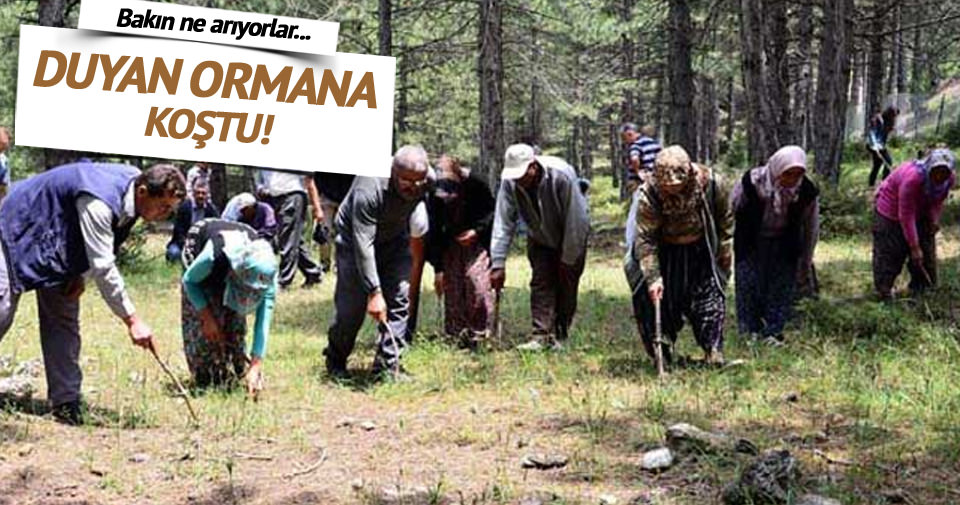 Manisa'da 'Siyah Elmas' ormanı bulundu