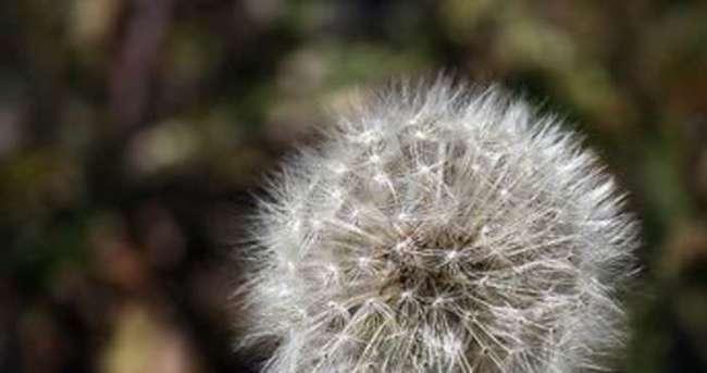 Polen alerjisine karşı tedbirinizi alın