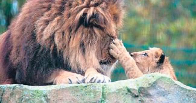 Hem annelik hem babalık yapıyor
