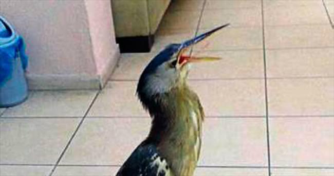 Hint gölet balıkçıl kuşunu buldular