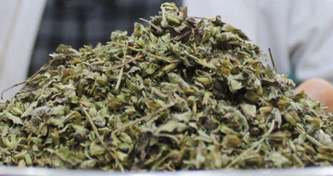 Stresin ilacı melisa otu