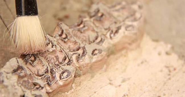 242 milyon yıllık sürüngen fosili bulundu!