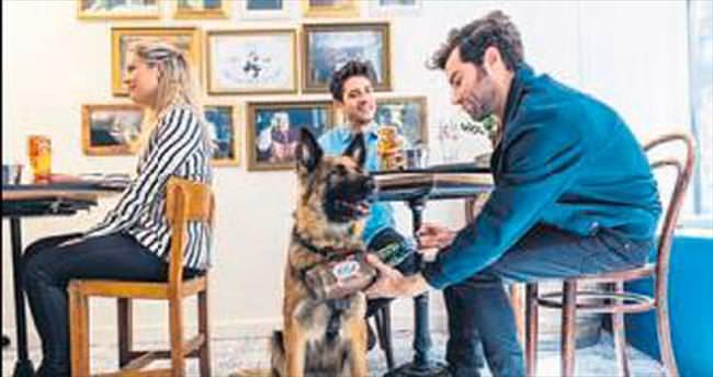 Barın garsonları eğitimli köpekler